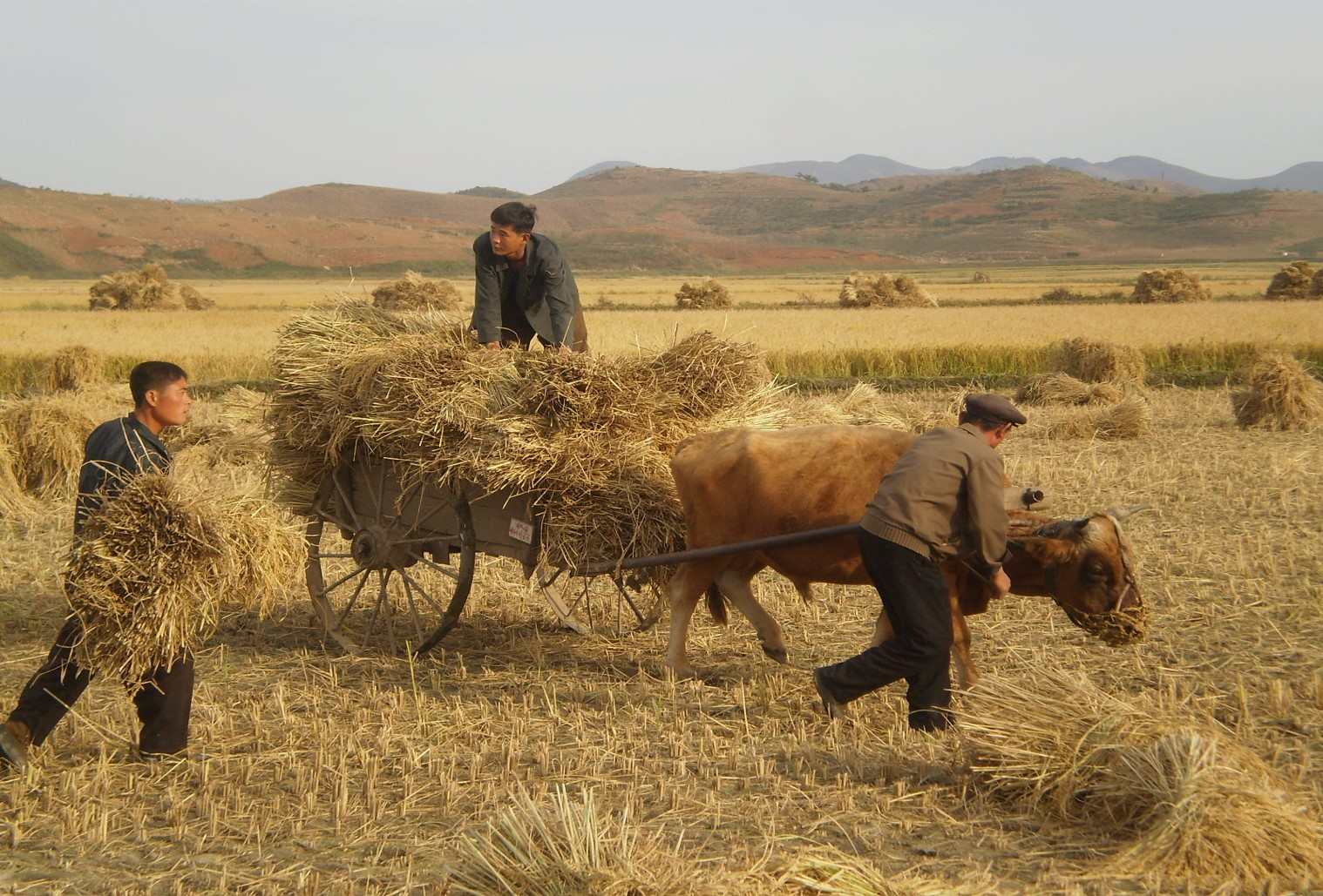 Sector Working Group: Food Security and Agriculture